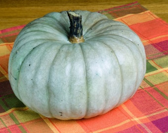 Jarrahdale Pumpkin Seeds, Blue Pumpkin Seeds, Jack o Lantern Pumpkin Seeds, Kids seeds, Gardening Gifts, Fall Garden, Vegetable seeds