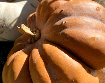 Cinderella Pumpkin Seeds, Fairytale Pumpkin Seeds, Easy Kids garden, Grow your own pumpkins, Pumpkin pie seeds, plant pumpkin seeds