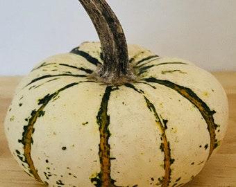 Mini pumpkin seeds Lil Pump Ke Mon, Mini Pumpkin, Striped Pumpkin Seeds, Kids garden, Gardening Gifts, small pumpkin seeds, Vegetable seeds
