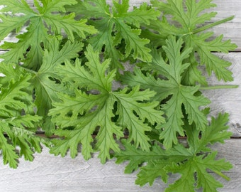 Scented Geranium Leaves Dried, Dried geranium flowers, Potpourri, Dried Herbs, Immune Tea Gifts, Herb Gardening Gifts, Medicinal Herbs