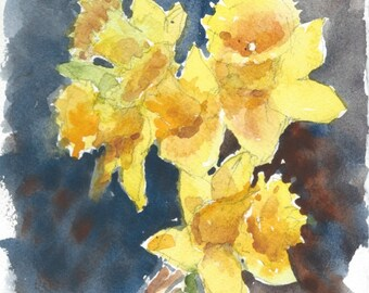 Daffodils B518