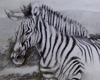 Zebra - Stepping out in Stripes