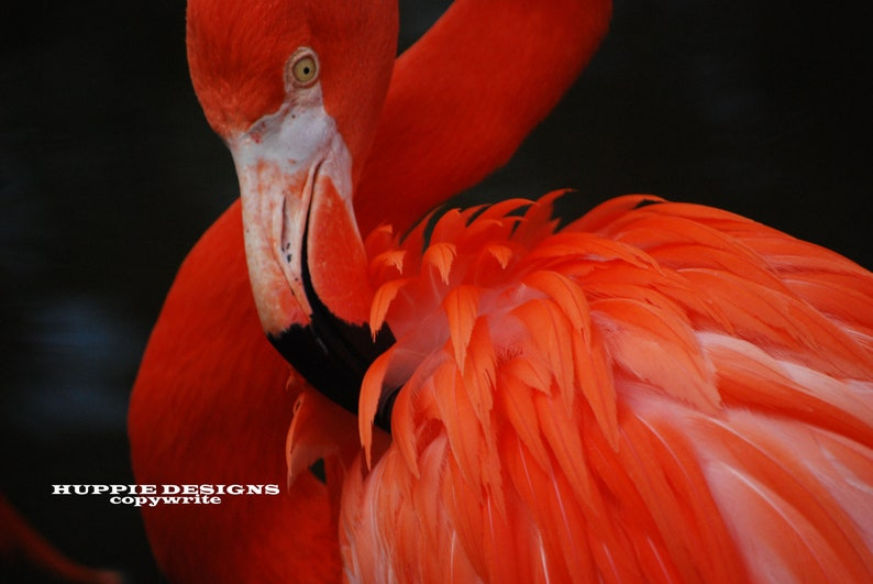 Flamingo 8 x 10 Matted and signed image 0
