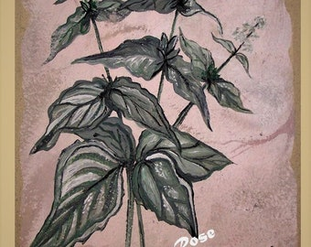 Basil plant - spice - wife gift-  sage - rosemary - thyme -- oregano - Set - kitchen art,Spice painting,Spice Art,chef gift,kitchen decor