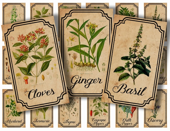 photograph about Printable Vintage Labels known as Herb and spice apothecary labels electronic printable common labels for jars bottles tags and sbook embellishment