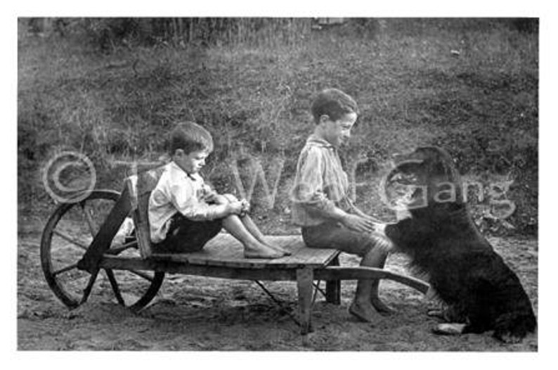 Vintage Retriever Dog CardOn the Farm U.S.A c. 1920 image 0