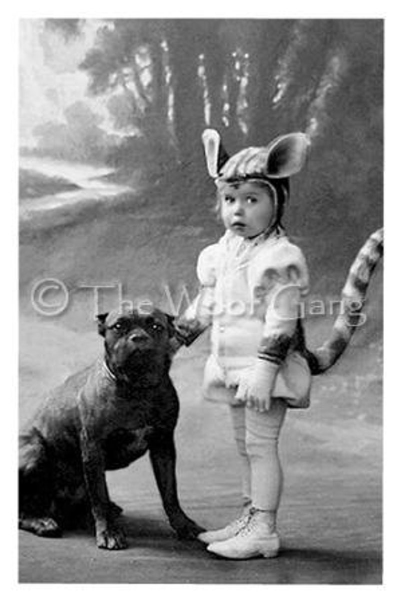 Pit Bull Rottweiler and Girl in Cat Costume Germany 1904 image 0