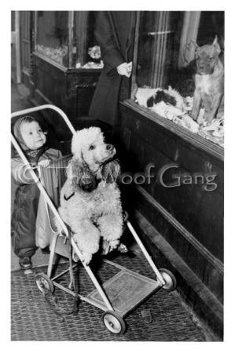 Vintage Poodle Dog CardHow Much Is that doggy in the window image 0