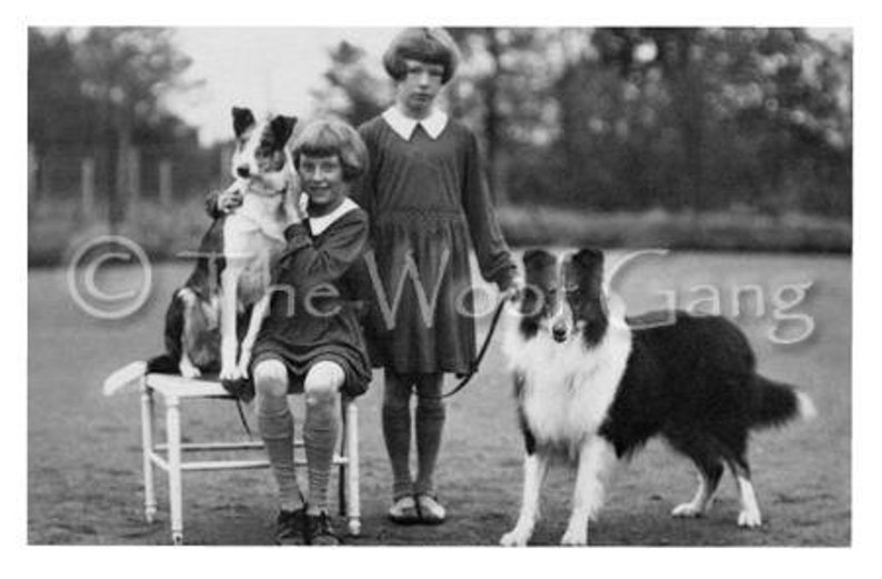 Vintage Dog Cards with Smooth and Rough Collies England c. image 0