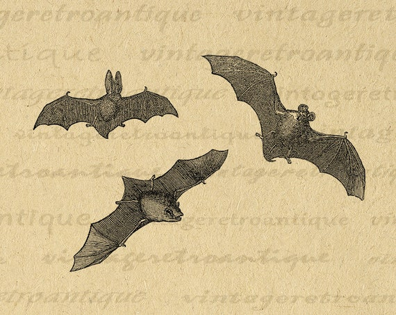 photograph regarding Printable Bats called 11x14 Printable Bats Image 3 Bats Electronic Impression Obtain Halloween Bat Example Antique Clip Artwork for Transfers and so on 300dpi No.1436