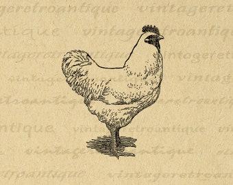 Printable Chicken Digital Image Download Illustration Graphic Antique Farm Animal Clip Art for Transfers Prints etc 300dpi No.3184