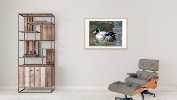Mallard Duck (PR) (canvas)