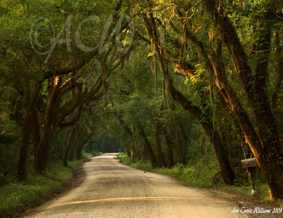Oak Covered Dirt Road on Edisto Island, South Carolina (PR) (canvas)