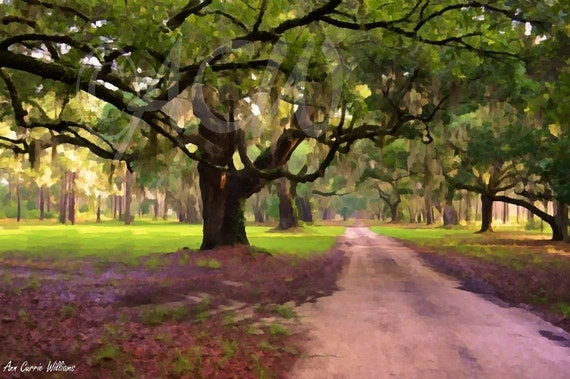 Oak Drive at Cypress Trees Plantation, Edisto Island, South Carolina (canvas)