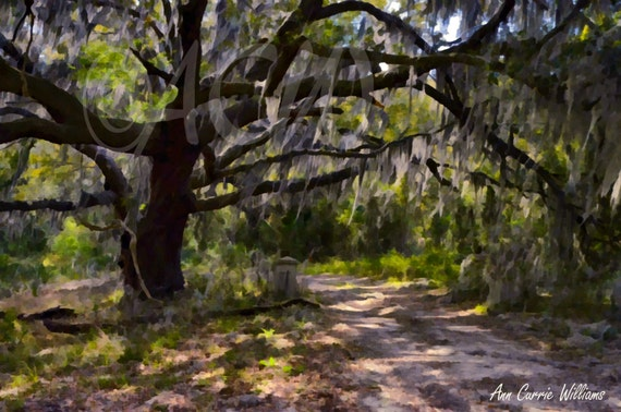 Mossy Gate at Brookland Pointe, Edisto Island, South Carolina (canvas)