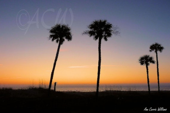 Hunting Island, Sunrise in the Palmettos in South Carolina (Canvas)