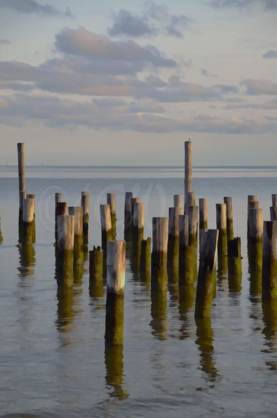 Pilings in the bay off Cape Charles Virginia