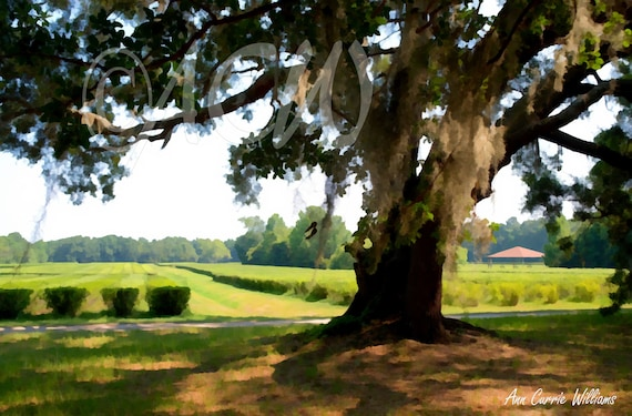 Tea Plantation on Wadmalaw Island, South Carolina (canvas)