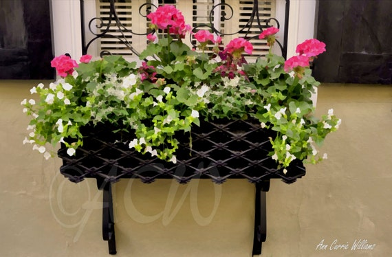 Window box with pink geraniums in  Charleston, South Carolina (canvas)