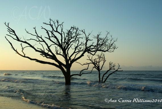 Bone Yard Beach at Botany Bay on Edisto Island South Carolina 2 (PR) (canvas)