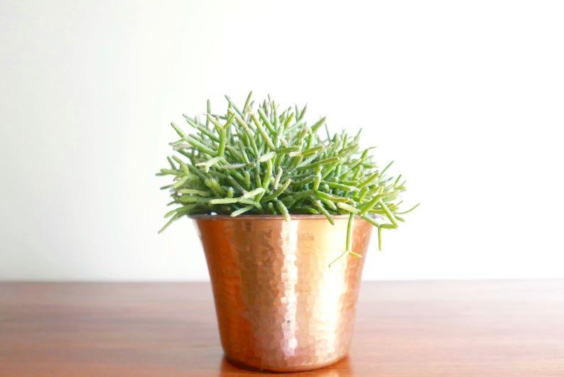 image 0 ...  sc 1 st  Etsy & French hammered copper flower pot 1950s / planter cactus | Etsy