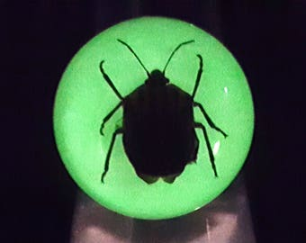 real scarab striped beetle glow in the dark silver oddity ring