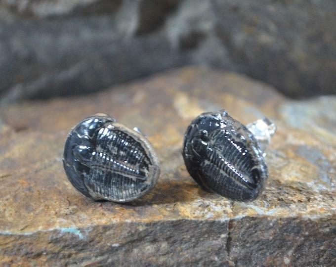 Genuine Trilobite Fossil stud Earrings, sterling silver, fossil earrings, ancient stone