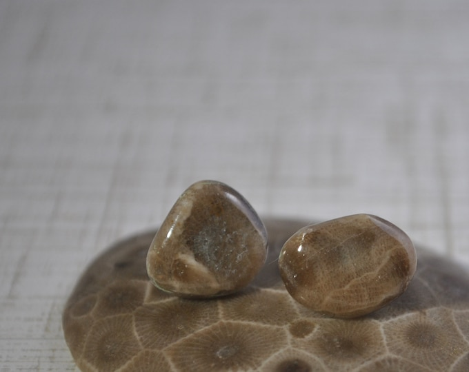 Petoskey stone stud earrings with, Up North earrings, Lake Michigan earrings, fossil, #12