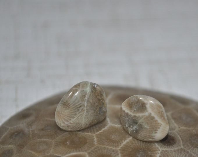 Petoskey stone stud earrings with, Up North earrings, Lake Michigan earrings, fossil, #2