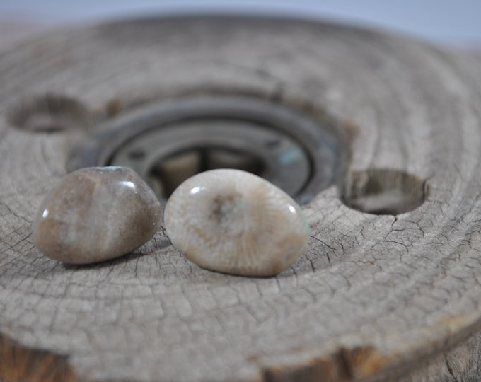 Petoskey stone stud earrings with, Up North earrings, Lake Michigan earrings, fossil, #4