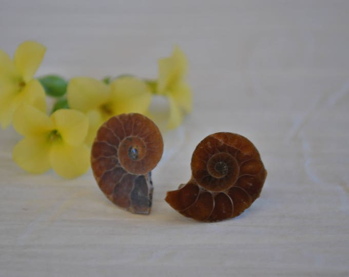 Genuine Ammonite Fossil post earrings, fossil jewelry