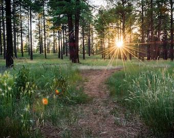 Sunburst in the Woods - Flagstaff, AZ