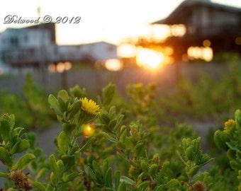 Sunset at the Beach - Galveston TX - 11x14