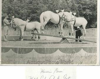 Harris Bros. circus pony horse act vintage photo