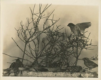 Birds by branches vintage art photo