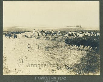 Farmers harvesting flax antique photo Washington