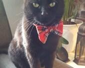 Royal Stewart Tartan Cat ...