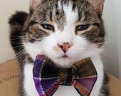 Culloden Tartan Cat Bow T...