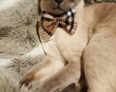 Tartan Cat Bow Tie, Meet ...
