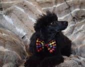 NEW Rainbow Tartan Dog Bo...
