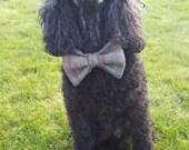 Tweed Dog Bow Tie, Meet H...