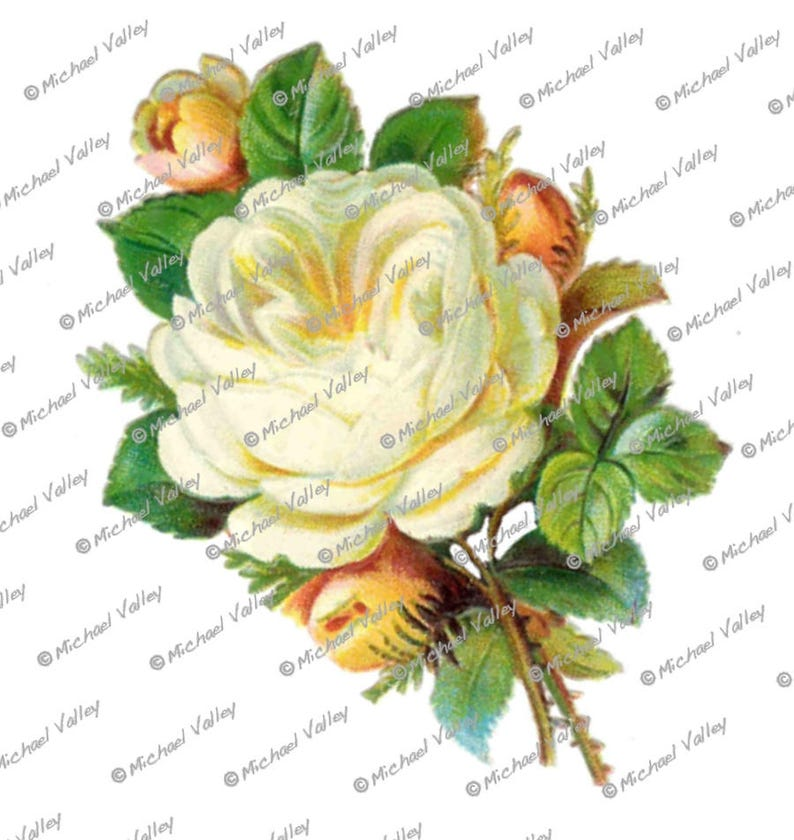 Vintage Cream White Rose Beautifully Detailed Png Download Etsy