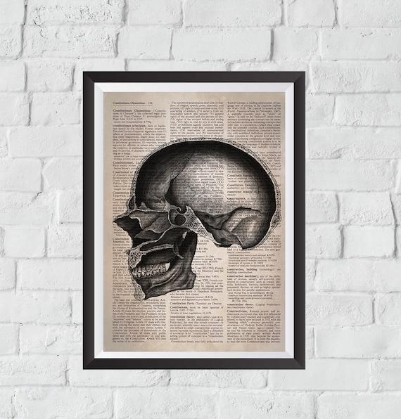 "14/"" x 24/"" Canvas Art Poster Rhino Skeleton Bone Fossil Collection"