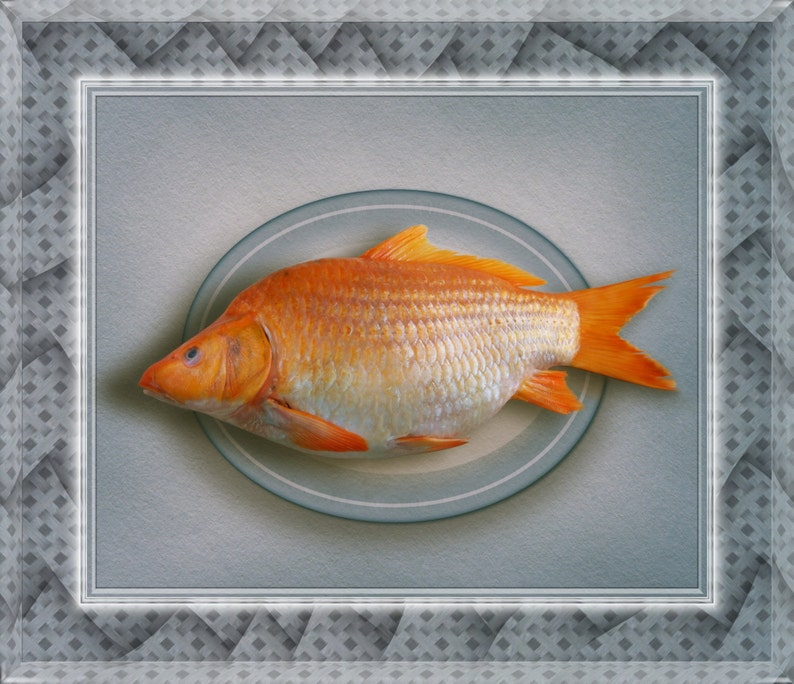 GOLDFISH ART Unique Virtually Framed Print on Aluminium image 0