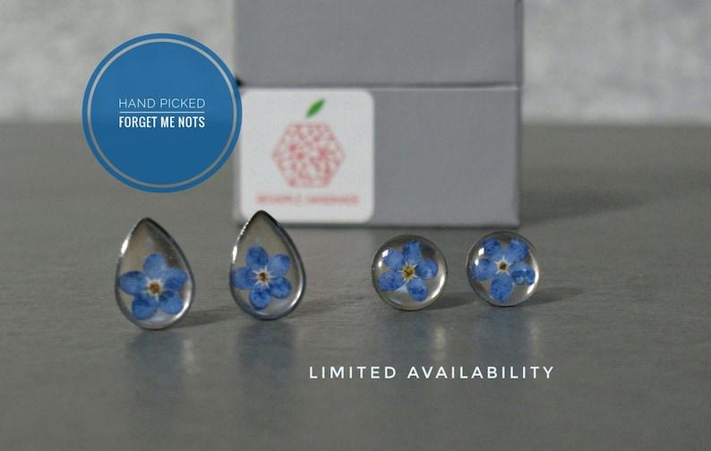 Real Forget Me Not Stud Earrings  Resin Earrings  Flower image 0