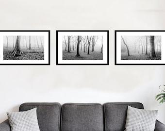Silver Wood Black and White Yorkshire Photography. Set of 3 Woodland Nature, Landscape Art Prints