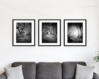 Black and White Yorkshire Photography. Set of 3 Woodland Paths Nature, Landscape Art Prints