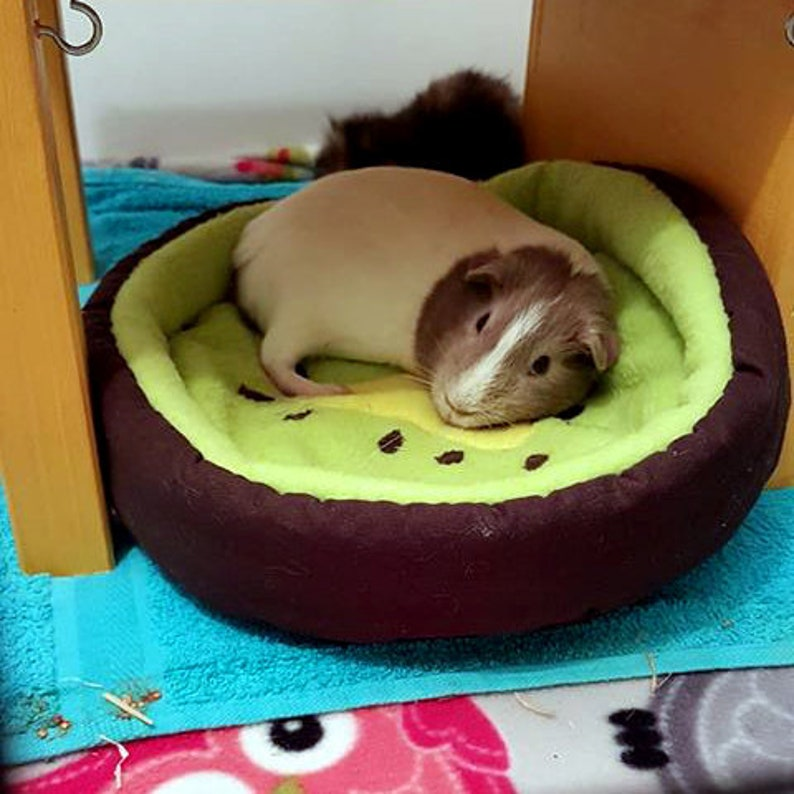 Avocado bed for guinea pigs