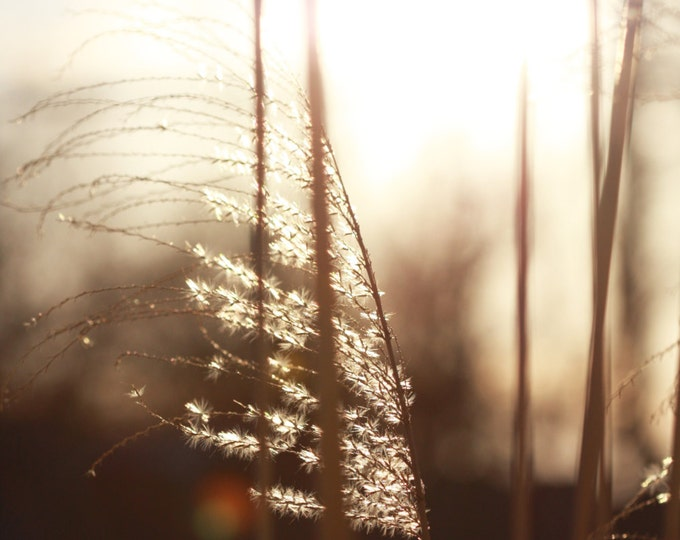 Sunrise with Grass in Wind Photo Art, Sepia Tone Sunrise Nature Photo Art, Light and Grass Instant Download Nature Photography Card or Print