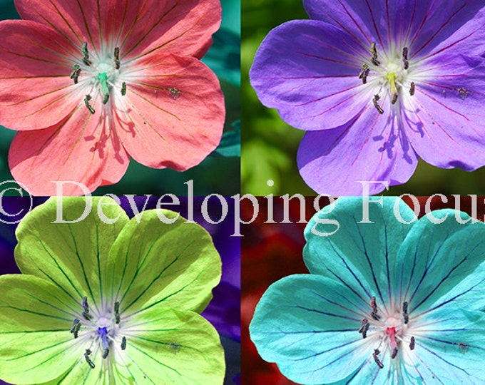 Multicolor Hardy Geranium Pop Art Nature Instant Download Photography Print, Colorful Flowers Photograhy Card Download or Downloadable Print